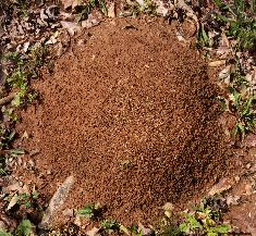 A Typical Ant Hill
